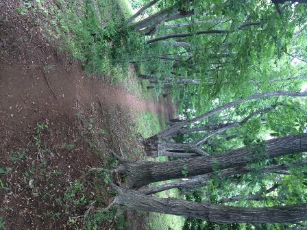林の中をウォーキング