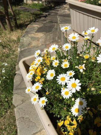 2016_spring01