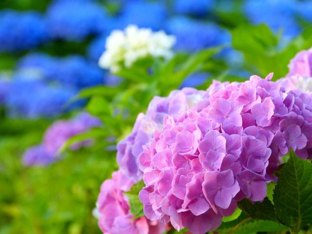 茨城県守谷市カウンセリングルーム i Balance 7月の予約状況