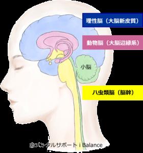 三位一体脳モデル